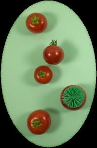 עגבניות מבלות על רקע ירוק, לאחת מהן פאה ירוקה פאנקית